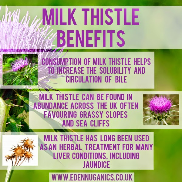 milk-thistle-finished