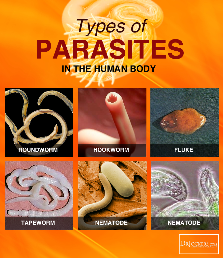 What Type Of Parasites Can Dogs Get
