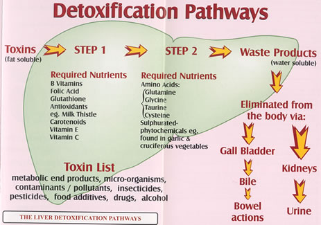 detox_pathways2