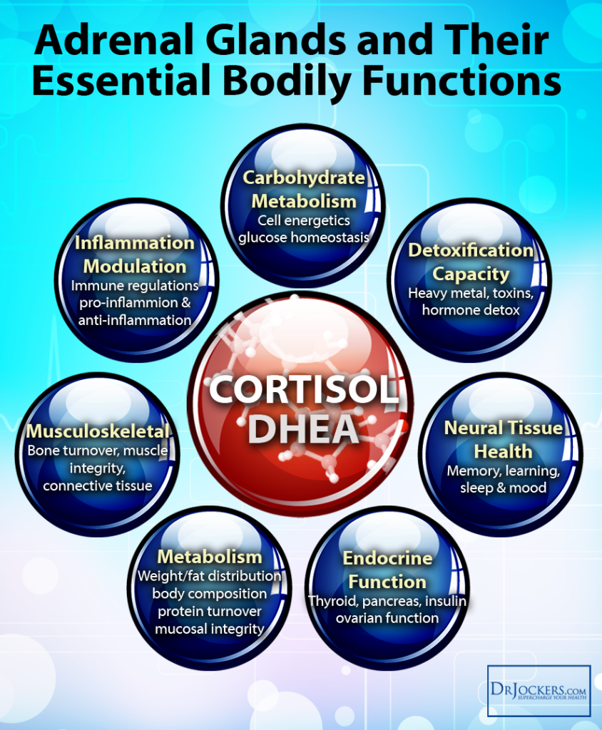 The effect of diet components on the level of cortisol