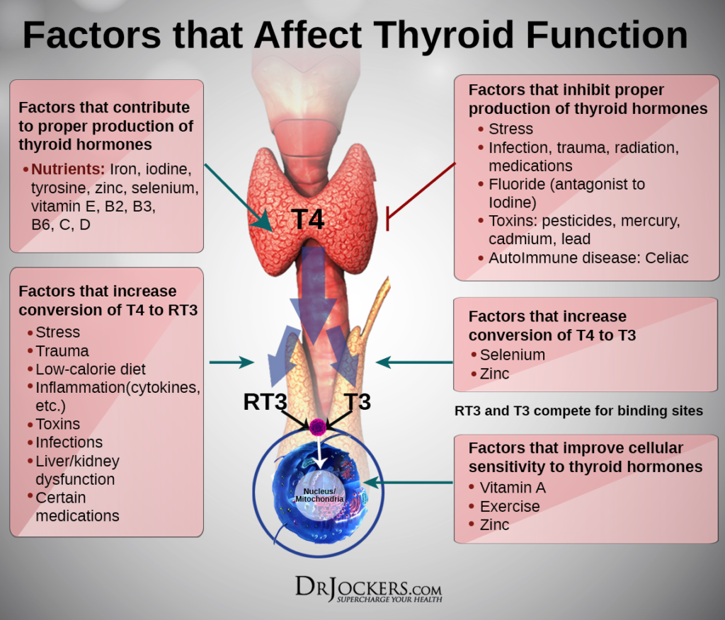 thyroid_affectingfactors-1024x876
